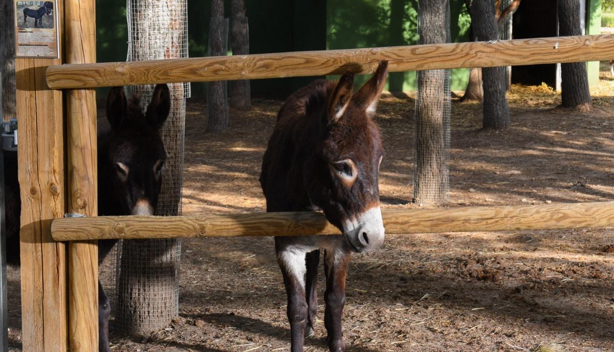 burro-slider